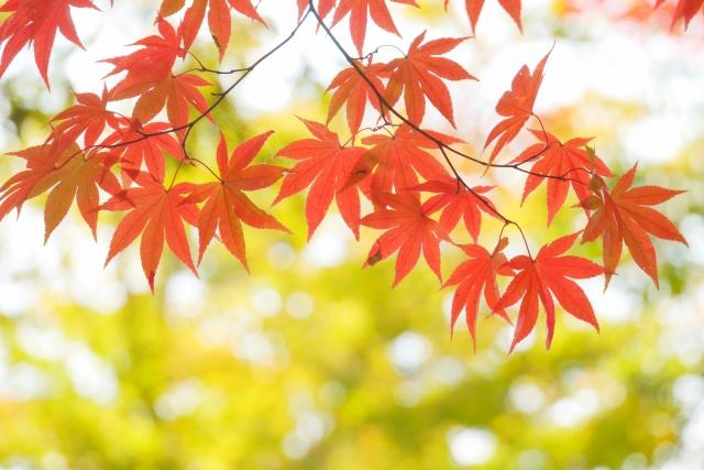 喘息と季節の関係|11月気圧の変化に要注意です。